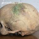 Skull from Dayak Borneo Indie